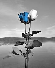 Black White Blue Rose Wall Art Bathroom Bedroom Home Decor Matted Picture
