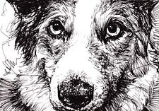 ORIGINAL pen and ink pet portraits from photos by artist Claire Fisher