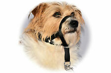 HALTI PUPPY DOG STOPS PULLING COLLAR TRAINING  Head Muzzle Halter Clip On