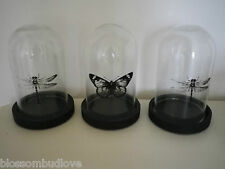 VINTAGE DISPLAY BOTANICAL GLASS DISPLAY DOME WITH STAND BUTTERFLY or DRAGONFLY