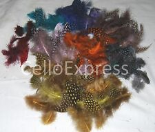 Coloured Spotted Kids Craft Feathers Spotty Rooster Craft Funky Fluffy