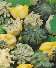 Gourd Seed: Shenot's Crown of thorns  Gourd Seeds  Fresh Seed  FREE Shipping