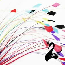Feather Stripped Coque Dots Bunch - Craft Millinery Fly Fishing