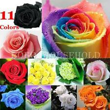 50/100Pcs Rare Rose Flower Seed Lover Gift Home Garden Plant Rainbow 11 Colors