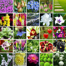 Multifarious Ornamental Flower & Plants Seeds for Garden Home Yard View Decorate