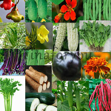 13 kinds of vegetables and flowers Plants Gardening Easy to Grow seeds