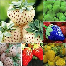 Wholesale 100 PCS Strawberry Seeds Nutritious Delicious Fruit Vegetables Seed
