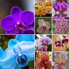 20 PCS Mix Color Garden Phalaenopsis Flower Seeds Bonsai Plant Butterfly Orchid