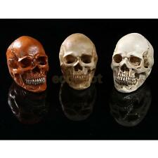 Various Resin Model Homosapiens Skull Human Skeleton Head Halloween Prop Decor