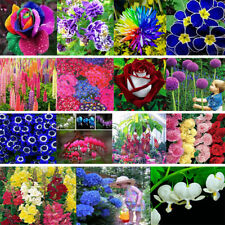 Various Hydrangea Orchid Ideal Garden Potted Seeds Rare Flower Plant Ornamental
