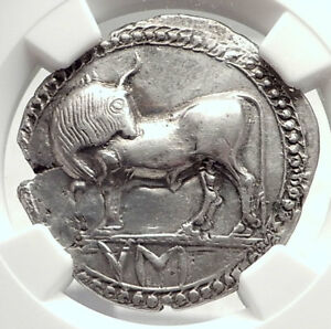 Click now to see the BUY IT NOW Price! SYBARIS LUCANIA AUTHENTIC ARCHAIC 550BC SILVER GREEK STATER COIN BULL NGC I73337