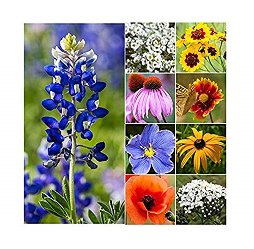 30, 000 Seeds of Texas & Oklahoma Wildflower Seed Mix - Native Annuals, and Texas
