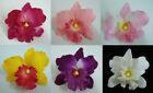 Orchid Silk flower Hair Clip Choose the color
