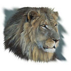 LION EYE OF THE KINGDOM T-SHIRT ALL SIZES AND COLORS (377)