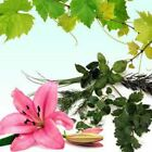 Patchouli Fragrance Oil - Soap And Candle Making Supplies - Free Shipping
