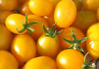 50 Seeds Super Sweet Yellow Grape Tomato Organic Gold Tiny Small Cherry Tomatoes
