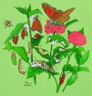 MONARCH BUTTERFLY LIFECYCLE--Butterflies Bugs Science Nature Kids T shirt XS