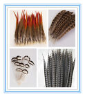 Wholesale Beautiful Natural Pheasant Feathers All Wedding Favor Craft Trimmings