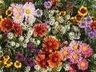 Bird Butterfly n Bees Wildflower Seeds Mix 150 to 1 LB Honey Pollinator Easy S12