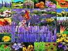 All Perennial Wildflower Mix Seeds (1600 to 40 LB) Flower Blend Easy Grow Sale 6