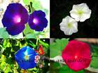 Day & Night Blooming Morning Glory Seed Mix Rare W/ Moonflower Vine!  #ST23