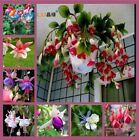 100 Pcs / Bag Fuchsias Seeds Mixed Color Potted Flowers Planting Flowers Bell Fl