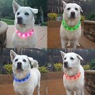 • LED Light Up Dog Collar Pets Glow Safety Flash USB Rechargeable waterproof