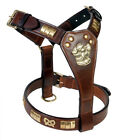 LEATHER STAFF BULL TERRIER DOG HARNESS WITH KNOT, BRASS FITTED IN 8 COLORS