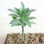 1x Real Touch Artificial Succulents Plastic Agave Flower Home Floral Party Decor