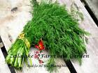 Dill Bouquet Herb Seeds Variety Sizes to 5LB Easy Grow Best Price Sale Save #34