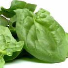 Spinach Viroflay Seeds Sizes to 5LB Bulk Garden or Microgreens FREE SHIP 322C