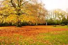 Autumn Colours Leaves in the Park, Trees, Forest, Canvas Picture Wall Art