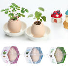 Mini Egg Plant Potted Shaped Bonsai Radiation Protection Desktop Decoration