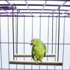 Wooden Birds Perch Parrots Hanging Swing Cage Pendant Toys Stand Holder S L