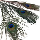 PEACOCK EYED STICKS - Fly Tying Material Peacock Herl Eye Feathers Hareline NEW!