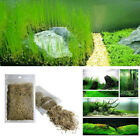 Внешний вид - Lot Green Water Grass Plant Seeds For Aquarium Fish Tank Foreground Decoration