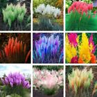 600PCS Pampas Grass Seeds Colorfull Home Garden Plants Are Very Beautiful flower