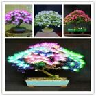20 pcs/bag Acacia tree bonsai flower seeds Perennial indoor plant for home garde