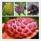 10 pcs Soursop fruit  Multi-color sweetsop seeds Delicious fruit seed sugar appl