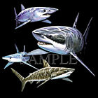 Sharks T-Shirt All Sizes And Colors (4048)