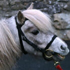 Libbys Webbing Miniature BRIDLE (with/without FLASH)
