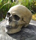"Skull Human size stone gothic ornament celtic or plain design 16cm/6.5"" H"