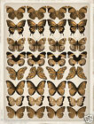 32 MIXED Vintage Sepia Butterflies Various Designs Edible Cup Cake Toppers