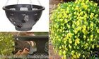 """Plantopia Easy Fill 14"""" Hanging Basket with watering device"""