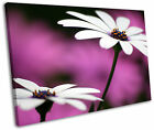 Purple Floral Gerbera Daisy Flower Framed Canvas Wall Art Picture Print