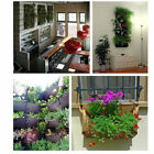 8 Pockets Vertical hanging wall garden planting bags Seedling Wall Planter 987