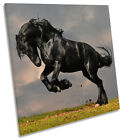 Black Stallion Horse SQUARE CANVAS WALL ART Picture Print