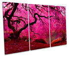 Autumn Japanese Maple Tree Pink TREBLE CANVAS WALL ART Box Framed Picture