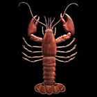 Lobster T-Shirt All Sizes And Colors (325)