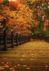 autumn photography awesome Photo print canvas choose your size